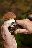 A man cleaning a porcini mushroom with a pocket knife