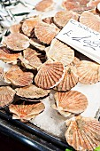 Scallops at a market