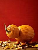 A pumpkin elephant for Halloween