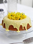 Orange marmalade cake with drizzled icing and daffodils