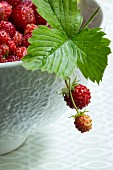 Wild strawberries in a bowl with a leaf