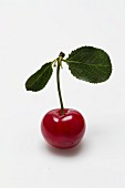 A sour cherry with a stem and leaves against a white background