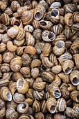 Lots of empty snail shells (full-frame)