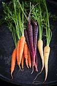 Assorted colourful mini carrots