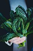 Fresh black kale