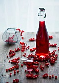 Redcurrant liqueur in a bottle and glass