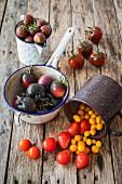Alte Tomatensorten in Behältern