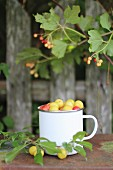 Mirabelle plums in an enamel cup on a garden table