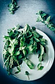 Fresh herbs (basil, mint and oregano) on a plate