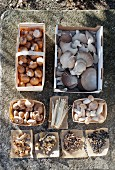 Assorted fresh and dried edible mushrooms