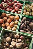 Assorted freshly harvested varieties of beetroot in crates