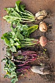 Assorted types of beetroot with leaves (seen from above)
