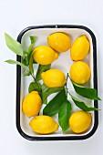 Lemons in an enamel dish (seen from above)