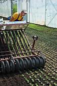 Feldsalat maschinell setzen