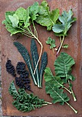 Assorted cabbage leaves: perennial cabbage, sea kale, high red curly-leafed cabbage, lacinato kale, East Frisian kale and leaf and spear kale