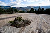 Vegetation Island On Granite Bedrock