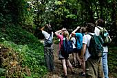 Rainforest Wildlife Watching