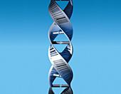 Barcode DNA