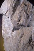 'Shatter Cones,Barringer Crater'