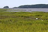 Inland marshes of Jekyll Island