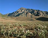 Mt. Tom,Eastern Sierra