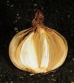Neck rot (Botrytis allii) in onion