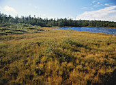 Raised Bog in New Brunswick