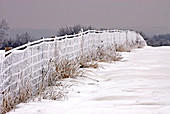Fence covered with snow and rime