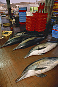 Dolphins Killed by Fishermen,Peru