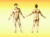Pressure Points,Male