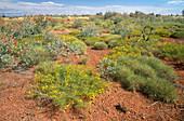 Western Australian Desert Plants