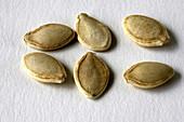 Summer Squash Seeds