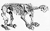 Megatherium,Extinct Ground Sloth