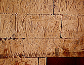 Tomb Reliefs Showing Agriculture