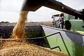 Iowa Farmer with Corn