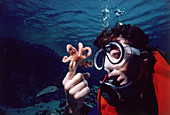 Common Octopus and diver