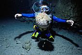 Child watches pufferfish,Red Sea