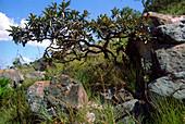 Cerrado Vegetation