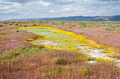 Vernal Pool,California