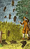Raining Rats,1680