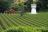Vineyard along Carmel Valley Road
