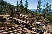 Loading Logs onto a Truck