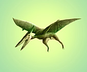 Pterodactyl,Illustration