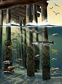 Life Under an Ocean Pier,Illustration