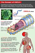 The Danger of Ebola,Illustration