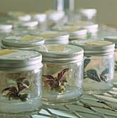 Micropropagation of plants