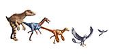 Evolution of Raptors,illustration