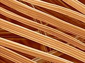 Bamboo Textile Fibers,SEM