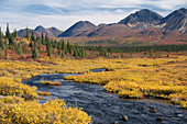Alpine Habitat and Alaska Range
