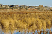 Marsh Lands in Wildlife Refuge